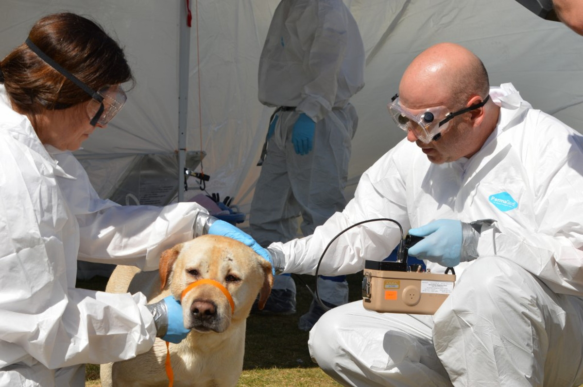Members of Maricopa County Animal Care and Control practice radiological monitoring with a dog.